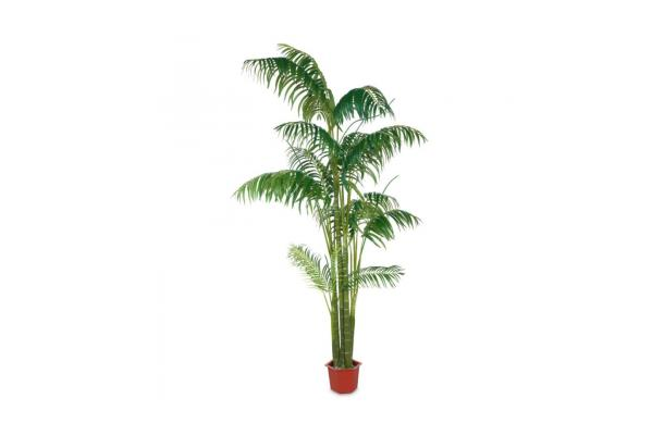 FÆK | Plant Palmier 300 - faek - verhuur - evenementen - feest - rental - events - artificieel - artificial