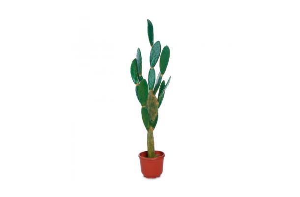 FÆK | Plant Cactus 180 groen - faek - verhuur - evenementen - feest - rental - events - artificieel - artificial
